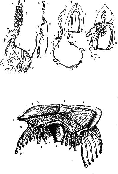 многоклеточные животные