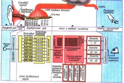 Рис. 33 Схема фонетической