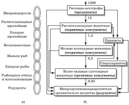 Схемы цепей в луговом