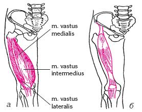 Книга Мегасила задних групп мышц бедра