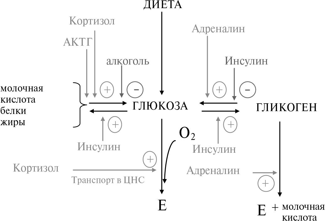 Схема превращения углеводов в