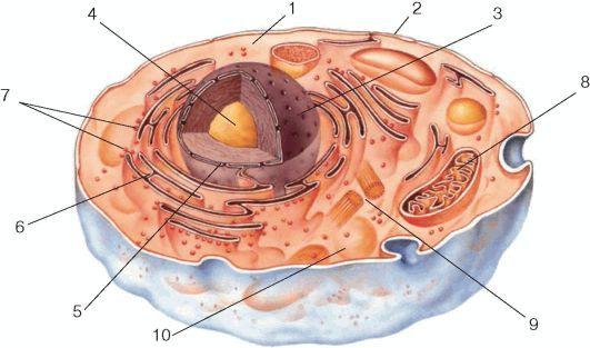 Клетка под электронным